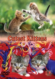Cutest Kittens, DVD