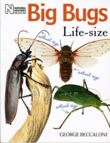 Big Bugs Life-Size, Paperback Book
