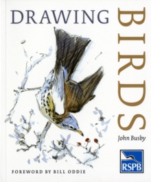 Drawing Birds, Paperback