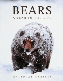 Bears : A Year in the Life, Paperback Book