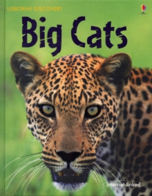 Big Cats, Hardback Book