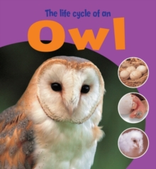 The Life Cycle of an Owl, Paperback