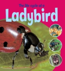 The Life Cycle of a Ladybird, Paperback