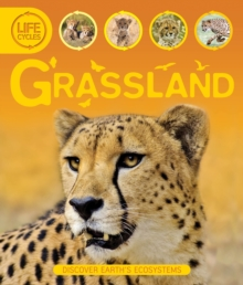 Life Cycles: Grassland, Paperback