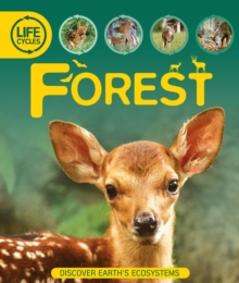 Life Cycles: Forest, Paperback