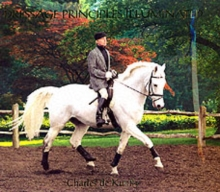 Dressage Principles Illuminated, Hardback