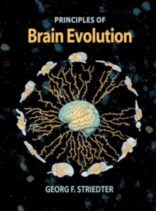 Brain Evolution, Paperback
