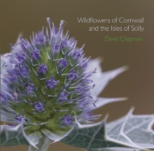 Wildflowers of Cornwall and the Isles of Scilly, Paperback Book