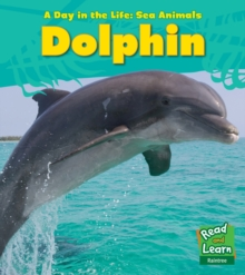 Dolphin, Paperback