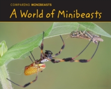 A World of Minibeasts : Comparing Minibeasts, Hardback