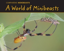 A World of Minibeasts, Paperback