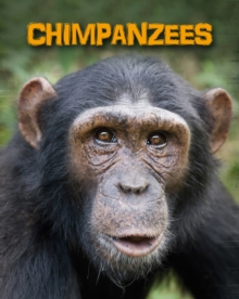 Chimpanzees, Paperback Book