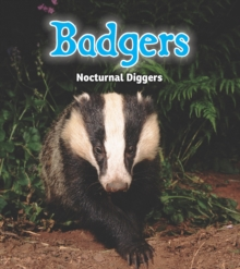 Badgers : Nocturnal Diggers, Hardback