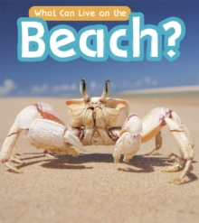 What Can Live at the Beach?, Paperback