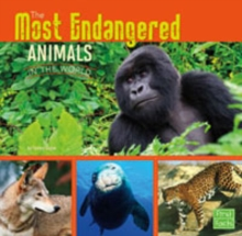 The Most Endangered Animals in the World, Paperback