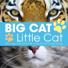 Big Cat, Little Cat, Paperback