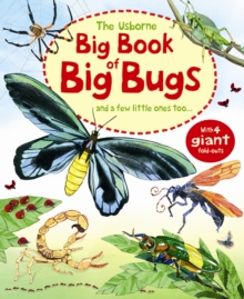 Big Book of Big Bugs, Hardback