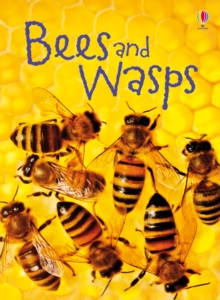 Bees and Wasps, Hardback Book