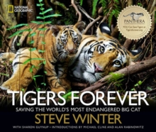 Tigers Forever : Saving the World's Most Endangered Big Cat, Hardback