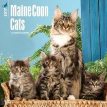 MAINE COON CATS 2017 WALL CALENDAR,