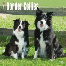 BORDER COLLIES 2017 WALL CALENDAR,