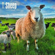 SHEEP 2017 WALL CALENDAR,
