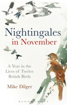 Nightingales in November : A Year in the Lives of Twelve British Birds, Hardback