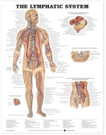 The Lymphatic System Anatomical Chart, Wallchart