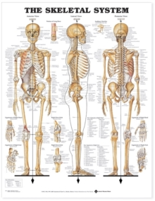 The Skeletal System Anatomical Chart, Wallchart Book