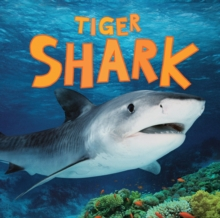 Tiger Shark, Paperback Book