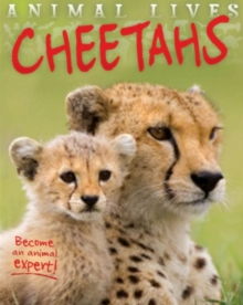 Animal Lives: Cheetahs, Paperback