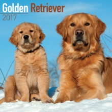 Golden Retriever Calendar 2017, Paperback