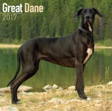Great Dane Calendar 2017, Paperback