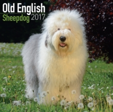 Old English Sheepdog Calendar 2017, Paperback