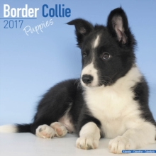 Border Collie Puppies Calendar 2017, Paperback