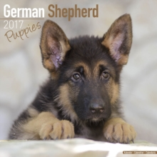 German Shepherd Puppies Calendar 2017, Paperback