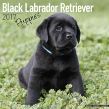 Black Labrador Retriever Puppies Calendar 2017, Paperback