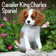CAVALIER KING CHARLES PUPPIES M 2017,