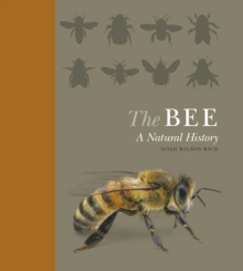 The Bee : A Natural History, Hardback