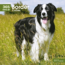 BORDER COLLIES 365 DAYS W 2017,