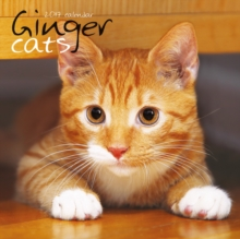 GINGER CATS W,