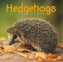 HEDGEHOGS W,
