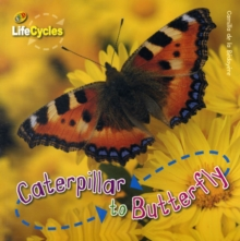 Caterpillar to Butterfly, Paperback