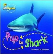 Pup to Shark, Paperback
