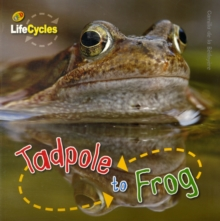 Tadpole to Frog, Paperback Book