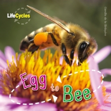 Life Cycles: Egg to Bee, Paperback