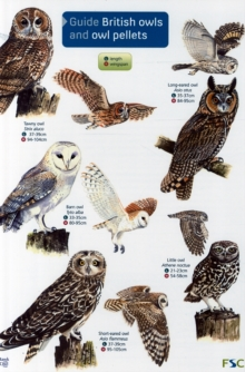 Guide to British Owls and Owl Pellets, Other printed item