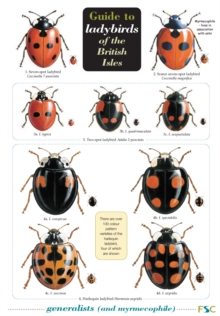 Guide to Ladybirds of the British Isles, Wallchart Book