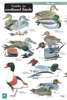 A Guide to Wetland Birds, Hardback