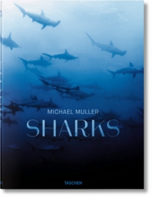 Sharks : Face-to-Face with the Ocean's Endangered Predator, Hardback Book